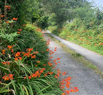 Secluded country lane